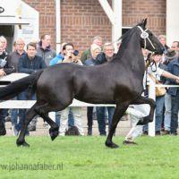 Aelya fan Sweach (Gerben x Folkert) 0248