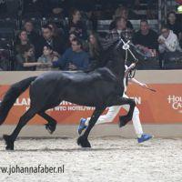 Age Hielke Z (Norbert x Doaitsen) 4121