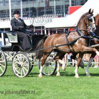 TW TP Amadeus en Eribo met Leendert Veerman 8526