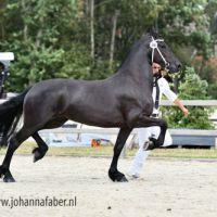 Alexia Oet Oale Kloosterveen (Hessel 480 x Beart 411) 7009