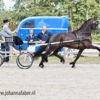 DK Egberdina's Tjeerd (v. Tsjalle 454) met Fia van der Stoep 7609