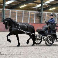 Black Beauty van Zomerstaete (Jouwe 485 x Loadewyk 431) met Age Okkema 6122 20210128